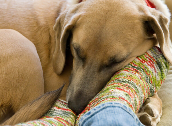 dog sleeping with owner's feet
