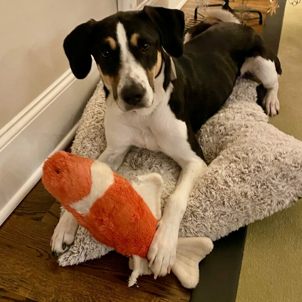 dog with fish toy